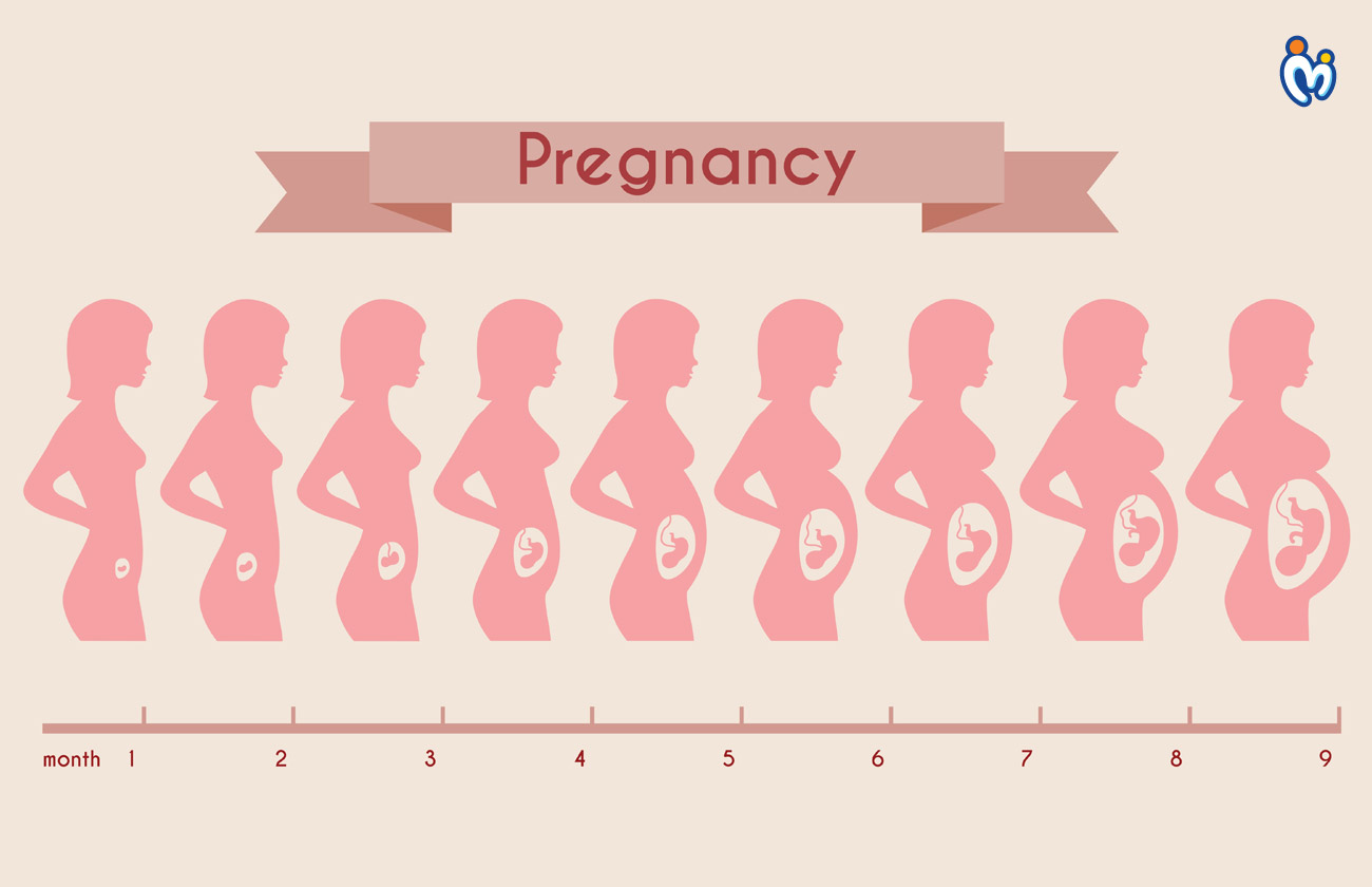 Pregnancy Stages- Monthly Changes in the Body and The Stages of Fetal Development